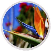 Round Beach Towel featuring the photograph Bird Of Paradise Open For All To See by Jerry Cowart