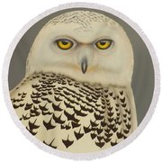 Round Beach Towel featuring the painting Birds Of A Feather by Darren Robinson