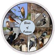 Birds Of Ontario Round Beach Towel