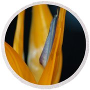 Round Beach Towel featuring the photograph Birds Of Paradise by Matt Harang