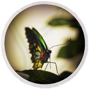 Birdwing Butterfly Round Beach Towel
