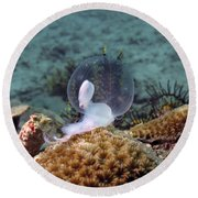 Round Beach Towel featuring the photograph Birth Of Marine Cuttlefish by Sergey Lukashin