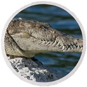 Round Beach Towel featuring the photograph Biscayne National Park Florida American Crocodile by Paul Fearn