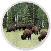 Bison At North Rim Round Beach Towel