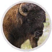 Bison From Yellowstone Round Beach Towel by Belinda Greb