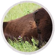 Bison Nap Round Beach Towel
