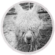 Black And White Alpaca Photograph Round Beach Towel