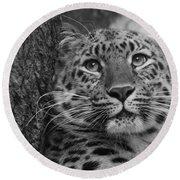 Black And White Amur Leopard Round Beach Towel