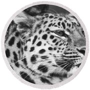 Black And White - Amur Leopard Portrait Round Beach Towel