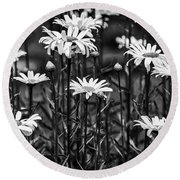 Black And White Daisies Round Beach Towel by Mary Carol Story