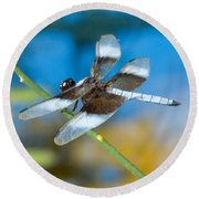 Round Beach Towel featuring the photograph Black And White Dragonfly by Mae Wertz