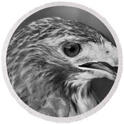 Black And White Hawk Portrait Round Beach Towel by Dan Sproul
