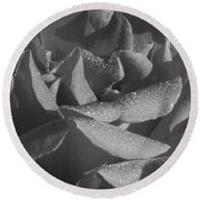 Black And White Morning Rose Round Beach Towel