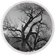 Black And White Oak Round Beach Towel by Janice Westerberg