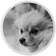 Black And White Portrait Of Pixie The Pomeranian Round Beach Towel