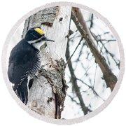 Black-backed Woodpecker Round Beach Towel by Cheryl Baxter