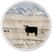 Black Baldy Cows Round Beach Towel
