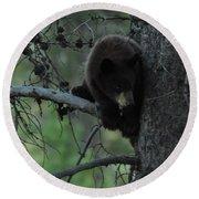 Black Bear Cub In Tree Round Beach Towel