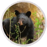 Round Beach Towel featuring the photograph Black Bear by Geraldine DeBoer