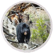 Round Beach Towel featuring the photograph Black Bear by Michael Chatt