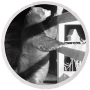 Round Beach Towel featuring the photograph Black Bear by Mim White