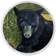 Round Beach Towel featuring the painting  Bear Painting - Scruffy - Profile Cropped by Jan Dappen