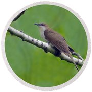 Black-billed Cuckoo Round Beach Towel