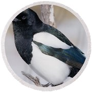 Black-billed Magpie Round Beach Towel by Eric Glaser