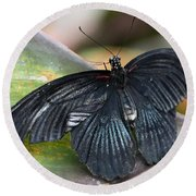Black Butterfly Round Beach Towel