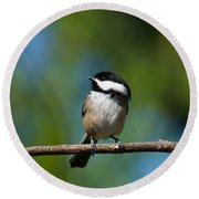 Black Capped Chickadee Perched On A Branch Round Beach Towel