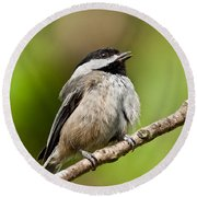 Black Capped Chickadee Singing Round Beach Towel