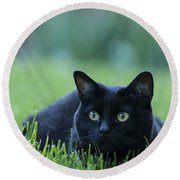Black Cat Round Beach Towel by Juli Scalzi