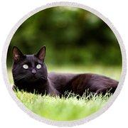 Black Cat Lying In Garden Round Beach Towel