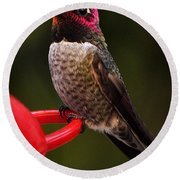 Round Beach Towel featuring the photograph Black Chinned Male Hummingbird by Jay Milo