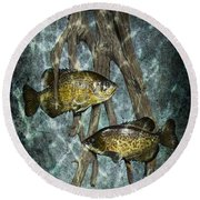 Black Crappies A Fish Image No 0143 Blue Version Round Beach Towel