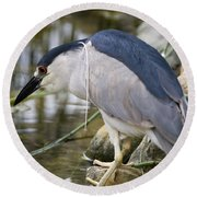 Round Beach Towel featuring the photograph Black-crown Heron Going Fishing by David Millenheft