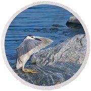 Black Crowned Night Heron Round Beach Towel