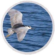 Black Crowned Night Heron In Flight Round Beach Towel