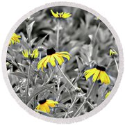 Black-eyed Susan Field Round Beach Towel by Carolyn Marshall