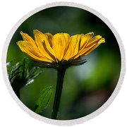 Black Eyed Susan Round Beach Towel by Sharon Elliott