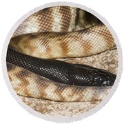 Black-headed Python Round Beach Towel