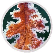 Round Beach Towel featuring the photograph Black Oak Leaf Rime Ice Yosemite National Park California by Dave Welling