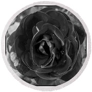 Round Beach Towel featuring the photograph Black Rose by Nina Ficur Feenan