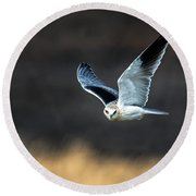 Black-shouldered Kite Elanus Axillaris Round Beach Towel