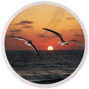 Black Skimmers At Sunset Round Beach Towel by Tom Janca