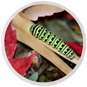 Black Swallowtail Butterfly Caterpillar Round Beach Towel