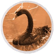 Round Beach Towel featuring the photograph Black Swan by Leticia Latocki
