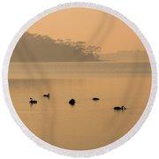 Black Swan Sunrise Round Beach Towel