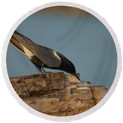 Round Beach Towel featuring the photograph Black Tern Fishing by James Peterson