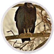 Black Vulture 1 Round Beach Towel